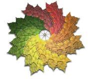Het Spiraalsgewijs bewegende Spectrum van de Herfst van het Blad van de esdoorn Stock Foto