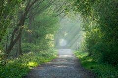Het spoor en de zonnestralen van het platteland Royalty-vrije Stock Foto's