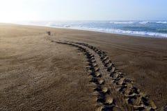 Het spoor van de schildpad op zandstrand Stock Fotografie