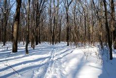 Het spoor van de ski in het bos stock afbeelding