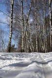 Het spoor van de ski in de winterbos Stock Foto's