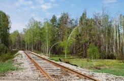 Het spoor van de spoorweg in het hout Royalty-vrije Stock Foto's