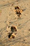 Het spoor van herten Stock Foto's