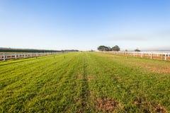 Het Spoor van het paardenrennengras Royalty-vrije Stock Foto