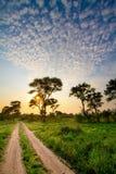Het spoor van Kruger Stock Foto's