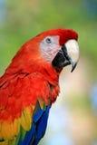 Het spreken van papegaai in een park Stock Fotografie