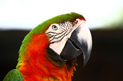 Het spreken van papegaai in een park in Florida Stock Foto's