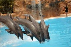 Het springen dolfijnen Stock Afbeelding