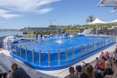 Het springen dolfijnen in blauwe pool in Marineland royalty-vrije stock afbeeldingen