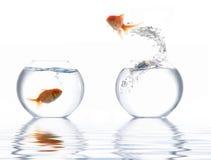 Het springen gouden vissen Royalty-vrije Stock Afbeeldingen