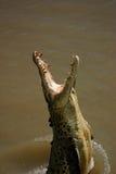 Het springen krokodil stock afbeeldingen