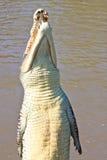 Het springen Krokodil stock afbeelding
