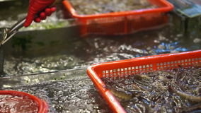 Het springen levende zeevruchtengarnalen in Chinese markt De hand die garnaal nemen voor verkoopt stock video