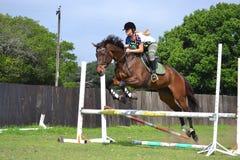 Het springen Merrie Royalty-vrije Stock Foto's