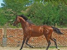 Het springen paard stock foto