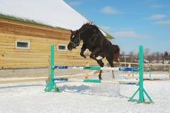 Het springen paard Stock Afbeeldingen