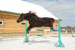 Het springen paard Stock Afbeelding