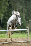 Het springen poney Royalty-vrije Stock Fotografie