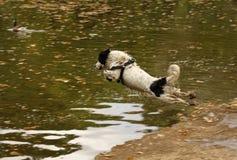 Het springen van de herdershond Royalty-vrije Stock Foto's