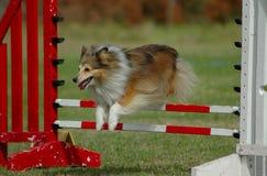 Het springen van de hond Royalty-vrije Stock Fotografie