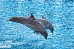 Het Springen van dolfijnen Royalty-vrije Stock Fotografie