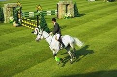 Het springen van het paard stock afbeelding