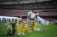 Het Springen van het paard Stock Foto