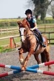 Het Springen van het paard Royalty-vrije Stock Afbeelding