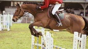 Het springen van het paard Stock Foto's