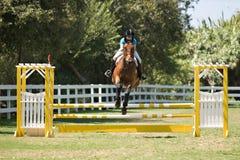 Paard het springen stock foto's