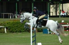 Het springen van het paard sport Stock Afbeelding