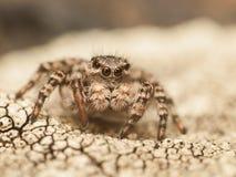 Het springen van spin op grond met barsten stock fotografie