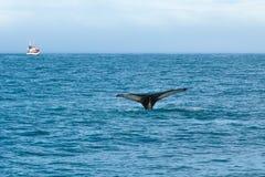 Het springen walvis in overzees op achtergrond van schip met toeristen ijsland royalty-vrije stock fotografie