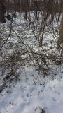 Het sprookjesland van de de Sneeuwwinter van Ohio in het hout Royalty-vrije Stock Afbeeldingen