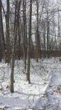 Het sprookjesland van de de Sneeuwwinter van Ohio in het hout Stock Foto