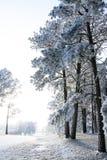 Het sprookjesland van de winter royalty-vrije stock afbeelding