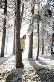 Het sprookjesland van de winter stock foto