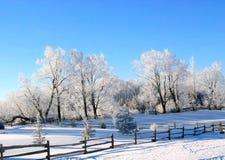 Het Sprookjesland van de winter Stock Afbeeldingen