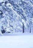 Het sprookjesland van de winter royalty-vrije stock afbeeldingen