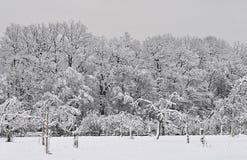 Het sprookjesland van de winter Royalty-vrije Stock Foto