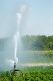 Het spuiten van de irrigatie op een gebied Royalty-vrije Stock Foto's