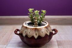 Het standbeeld van Boedha en succulent in ceramische po Royalty-vrije Stock Foto's