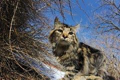 Het standpunt van een kat Royalty-vrije Stock Afbeelding