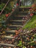 Het stappen in de Herfst royalty-vrije stock afbeeldingen