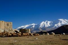 Het staren cattles door de meer en sneeuwberg royalty-vrije stock foto