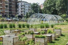 Het stedelijke die concept van de de landbouwduurzaamheid, in Milaan, Lombardije, Italië wordt gevangen royalty-vrije stock afbeeldingen