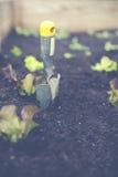 Het stedelijke tuinieren met opgeheven bed Royalty-vrije Stock Afbeelding
