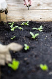 Het stedelijke tuinieren met opgeheven bed royalty-vrije stock foto
