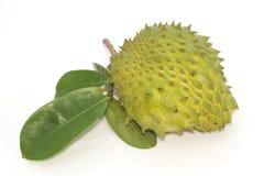 Het stekelige fruit van Vlaapple. (Annona muricata L.) Royalty-vrije Stock Afbeeldingen