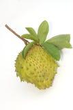 Het stekelige fruit van Vlaapple. (Annona muricata L.) Stock Afbeelding